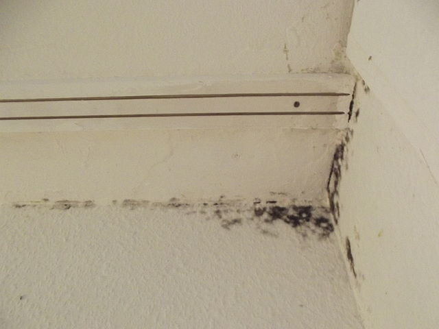 Black Mold Linked Health Hazards