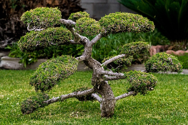 Health Benefits Of Bonsai Plants