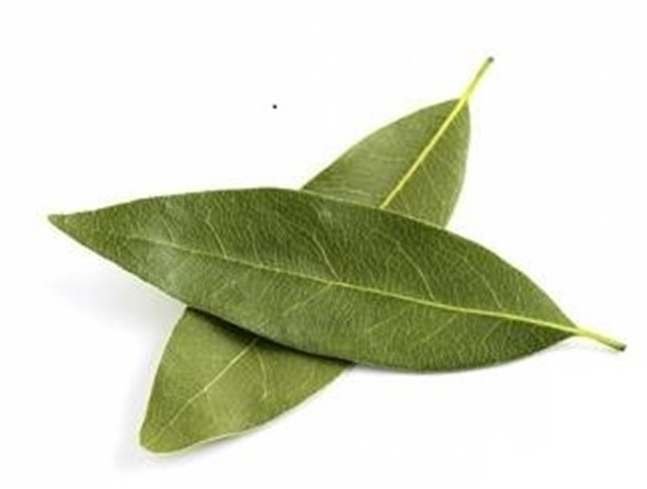 how to get rid of cockroaches bay leaves