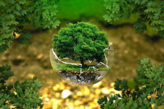 Health Benefits Of Bonsai Tree