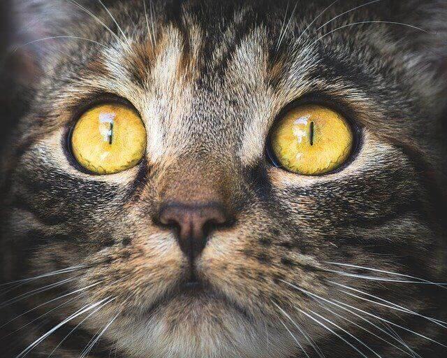 What is Zoonosis - Toxoplasmosis