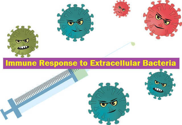 Immune Response to Extracellular Bacteria