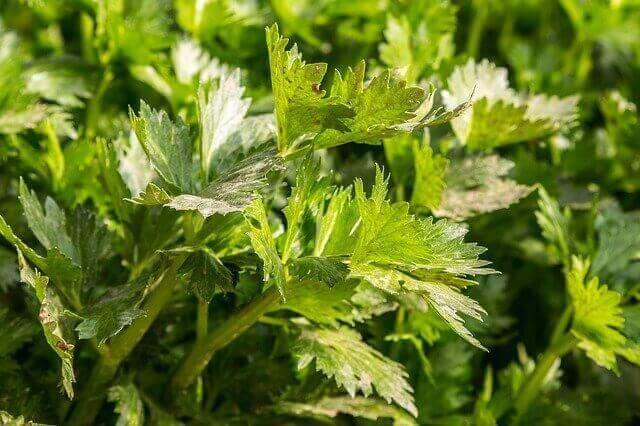 Foods Low In Carbs - Vegetable group
